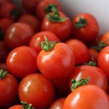 단단하고 싱싱한 대추방울 토마토 5kg(4-5번과) 방울/대추 랜덤발송