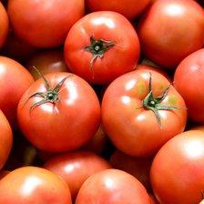 탱글탱글 완숙 토마토 찰 토마토 5kg(4-5번과)