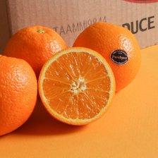 고당도 퓨어스팩 블랙라벨 오렌지 25과 중소과 2개구매시 55과 발송_추가이미지