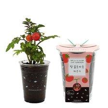 (컵 속의 작은 정원) 컵가든_방울토마토
